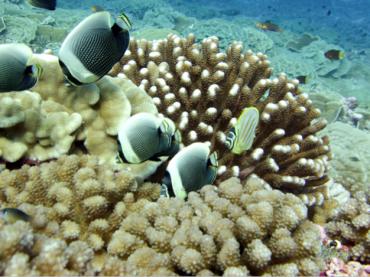 Ecosystems Conservation & Restoration