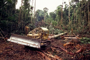 NEMA should use satellite monitoring during lock down period to track illegal deforestation.